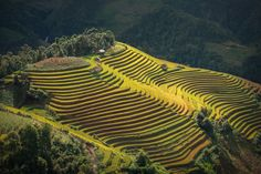 Mu cang chai (Vietnam) by sarawut Intarob