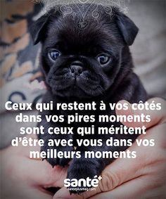 Speed Dating - Amie pour la vie Fun Facts About Animals, Love Quotes, Inspirational Quotes, Quote Citation, French Quotes, Sweet Words, Positive Attitude, Positive Affirmations, Jokes