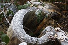 pictures of the letter r in nature | Letters in Nature - C | Flickr - Photo Sharing!