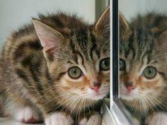 Yeaah A place kitten!