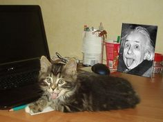 In this post, we have listed 35 photos of freaking coincidences caught on camera. These photos prove that coincidences are all around you. You have to see to believe. I Love Cats, Cute Cats, Funny Cats, Funny Animals, Cute Animals, Crazy Cat Lady, Crazy Cats, Photo Humour, Funny Coincidences