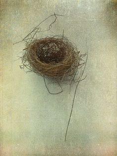Birds Nest Photograph, Still Life, Monochromatic  Vintage Inspired Print, Shabby Chic Wall Decor.
