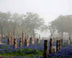 Bluebonnet Covered Cemetery, Fredericksburg, Texas What a lovely way to have a cemetery. Cemetery Headstones, Old Cemeteries, Cemetery Art, Cemetery Angels, Graveyards, Only In Texas, Fredericksburg Texas, Texas Bluebonnets, Loving Texas