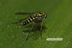 insecto muy pequeño