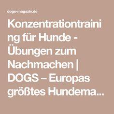 Konzentrationtraining für Hunde - Übungen zum Nachmachen   DOGS – Europas größtes Hundemagazin