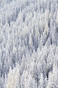 Snow Forest by Walter Quirtmair on 500px