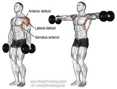 Dumbbell lateral raise. An isolation exercise. Target muscle: Lateral Deltoid. Synergistic muscles: Anterior Deltoid, Supraspinatus, Middle and Lower Trapezii, and Serratus Anterior. Note: I recommend a different way in which to perform this exercise, as explained on my website.