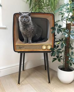 Hope you all had an amazing Christmas! Just wanted to share some of the small biz's I bought from, for my gifts (all tagged on separate… Crazy Cat Lady, Crazy Cats, Animal Gato, Cat Climbing, Cat Room, Pet Paws, Pet Furniture, Vintage Tv, Cats And Kittens