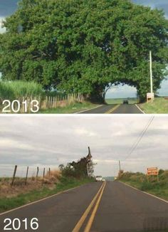 daily picdump 2880 640 high 09 Well, s**t, now Im depressed Photos) Save Mother Earth, Save Our Earth, Funny Images, Best Funny Pictures, Funny Photos, Satire, Troll, Video Humour, Giant Tree