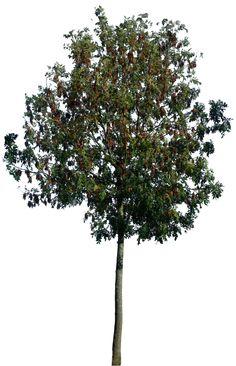 Tree 50 png by gd08.deviantart.com on @deviantART