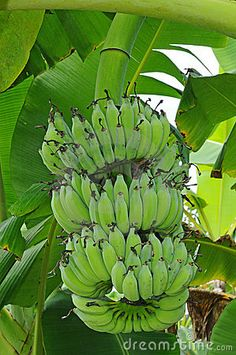 #5 Favorite Fruit: bananas