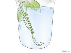 Image intitulée Grow Sweet Potatoes Step 8