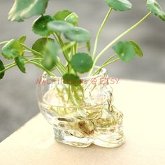 Skull Planter Vodka Cup Terrarium Container Wine Bottle