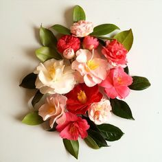 Camellias from overhanging branches in my neighborhood. They smell like a dream!