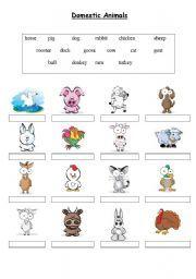 English worksheet: Domestic Animals - Matching exercise #FitFluential