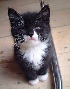 A Tuxedo baby...