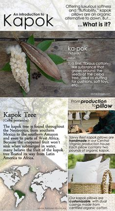 NEW! Kapok pillows from Savvy Rest Organic latex mattresses. Cool infographic telling what Kapok aka Java Cotton is all about and why it makes a great down alternative for pillows!