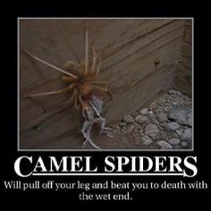 Scariest Bugs you've Ever Seen internet/in real life - Page 10 - Forum Australia Meme, Spiders In Australia, Scary Bugs, Life Page, Biggest Fears, Animals Beautiful, Camel, Scary Things, Reptiles