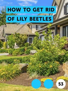 Learn Mixing Instructions for Crossbow Herbicide Lily Beetle, Red Beetle, Popcorn Tree, How To Kill Bees, Red Lily, Rubber Plant, Horse Fly, Weed Killer, Garden Pests