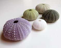 Sea Urchin Shells. Very rare natural colours. 5 urchins.
