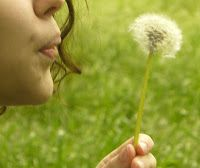 WILDCRAFT VITA: 40+ Things to do with Dandelions