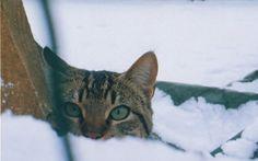 Cold Christmas Kitty