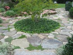 A rustic fieldstone patio interlaced with several varieties of creeping thyme.