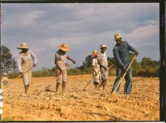 *Chopping cotton on rented land near White Plains. White Plains, Greene County, Georgia, June 1941. Reproduction from color slide. Photo by Jack Delano. Prints and Photographs Division, Library of Congress
