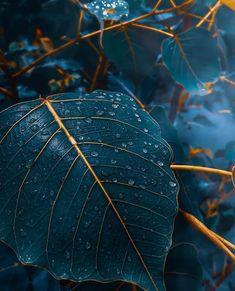 Blau Fall time blue elegant leaves What Is An Atomic Clock? Fall Background Wallpaper, Wallpaper Flower, Fall Wallpaper, Colorful Wallpaper, Nature Wallpaper, Leaves Wallpaper, Iphone Wallpaper Elegant, Mobile Wallpaper, Background Images