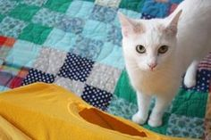 DIY Cat Tent : 9 Steps (with Pictures) - Instructables Diy Jouet Pour Chat, Animal Original, Diy Cat Tent, Homemade Cat Toys, Cat House Diy, Cat Basket, Cat Quilt, Cat Carrier, Cat Collars
