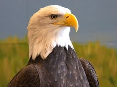 Learn all about America's national bird at the National Eagle Center in Wabasha. See live eagles up close at one of the center's educational programs, or take a look from their observation deck to see eagles soaring along the Mississippi River.
