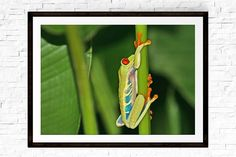 Frog Gifts, Tree Frog, Frog Decor, Costa Rica, Green Wall Art, Nature Prints, Nature Photography, Tr