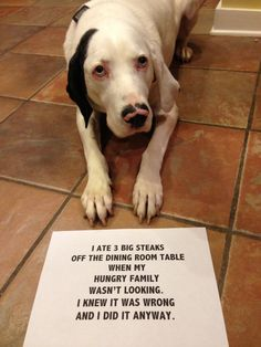 Whole Website of Pet Shaming - I could look at these all day.  #hilarious #dogs #pets
