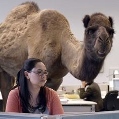 GEICO Camel Hump Day Commercial