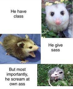 All Meme, Stupid Funny Memes, Funny Relatable Memes, Funny Shit, Funny Animal Memes, Funny Puns, Funny Animals, Funny Stuff, Hilarious Jokes