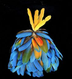 Kayapo Mekragnoti headdress by Houston Museum of Natural Science, via Flickr