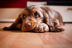 laaaangweilig.... http://fc-foto.de/36329532