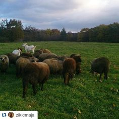 #Ecotourism is great potential for #Serbia #wheretoserbia #Travel #nature #sheep #hiking #naturelovers #Traveling #Travelgram #TopLikeTags #Travelling #Travelingram #Traveler #Travels #Travelphotography #Travelph #Travelpic #Travelblogger #Traveller #Traveltheworld #Travelblog #Travelbug #Travelpics #Travelphoto #Traveldiaries #Traveladdict #Travelstoke #TravelLife #sheepofinstagram