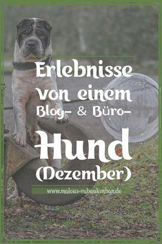 Vom Reisen, Arbeiten & Feiertagen – Kingston's Tagebuch (Dezember) – Malous Rabaukenbande | #hunde #blog #hundeleben | Bloghund Bürohund