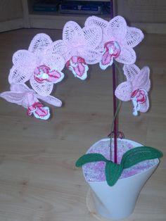 orchidej dárek