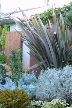 Laura's garden in Oregon -look at the great structure and color from foliage plants.