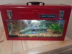 Aquarium tank in tool box