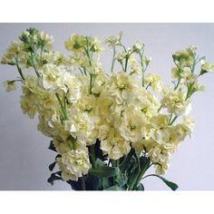 18 Best Stock Images Floral Arrangements Stock Flower Florals