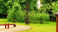 Živé stavby z vrby - vrbové stavby - Proutěné ploty a rohože na plot   Vrbové stavby - Naše realizace Living Willow, Stepping Stones, Golf Courses, Outdoor Decor, Stair Risers