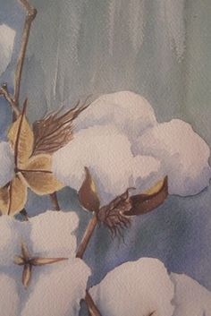 Carey the Crafter painting of cotton boll (edge of the wildwood)