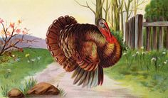 Turkey Fact: Ben Franklin, in a letter to his daughter, proposed the turkey as the official United States bird.