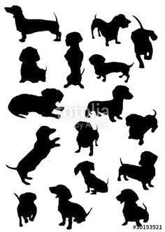 "Download the royalty-free vector ""daschund silhouette vectors"" designed by IFA at the lowest price on Fotolia.com. Browse our cheap image bank online to find the perfect stock vector for your marketing projects!"