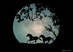 Full Moon by Stephanie Laird Art Painting, Animal Art, Scenery Pictures, Horse Painting, Amazing Art Painting, Silhouette Art, Horse Cards, Canvas Art, Art Painting Gallery