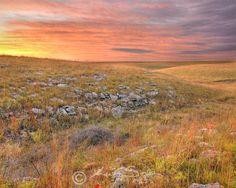 Tallgrass Prairie National Preserve (Flint Hills, Kansas).  Golden-peach-lilac sky; golden-green rocky fields.