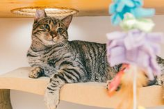 Meet the Cats of Meow Parlour